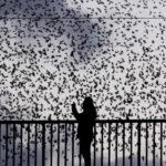20191130 Natura in città Muscetta