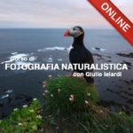 20200429 Fotografia Natura_1x1_Online