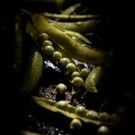 Andrea Di Lorenzo_Bacche di Piselli_ ADL_5041